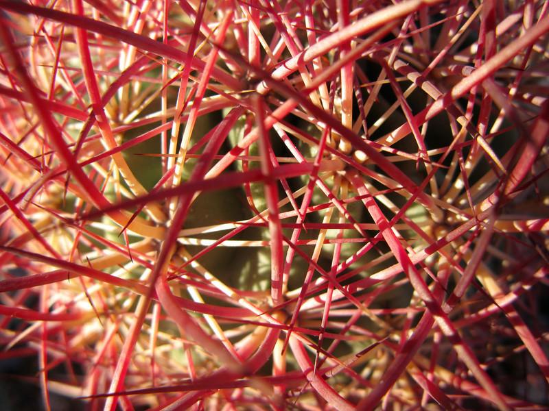Cactus needles.