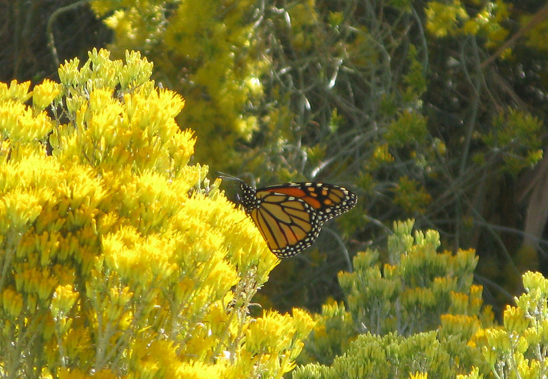 Monarch on the drive out from Horton.