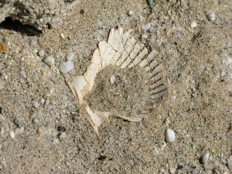 shell fossil along the way
