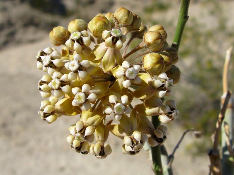 Need ID- grew on long tall stem
