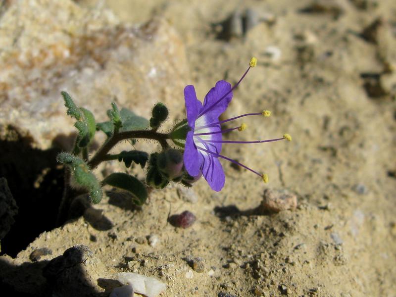 Recent rains encouraged a tiny flower