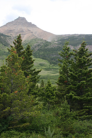 Camping in Waterton