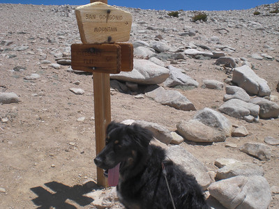 Wolly's First Summit San Gorgonio 6-9