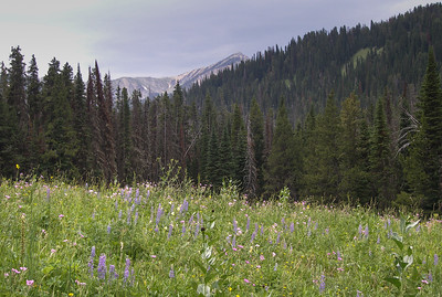 Its hard to go wrong with mountains and wilflowers.