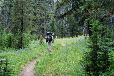 Essentially, the hike is up the Sentinel Creek trail for most of its way towards Expedition Pass, at the crest of the Madison Range.  This being July, thee were lots and lots of wildflowers.