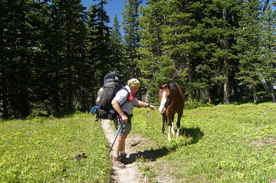 Over the first five miles, the trail gains about 1000 feet.  In the next three miles, it will gain another 1800 feet.  Here we have arrived near the first of the Spanish Lakes, and this horse is hobbled, but very friendly.