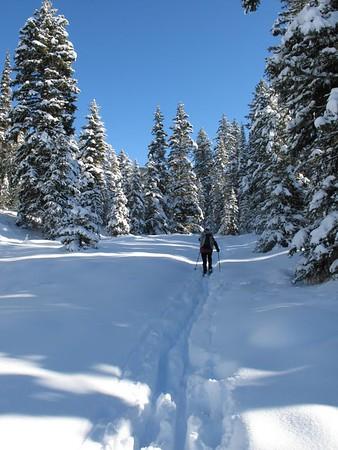 Big Tree Meadow Ski Nov10