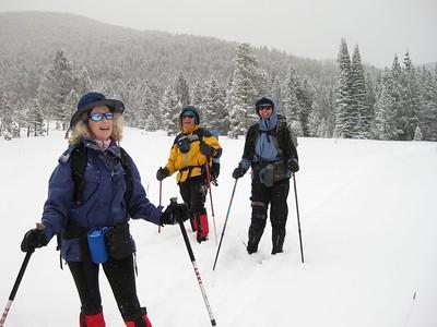 Buckskin in the Snow 24Jan2010
