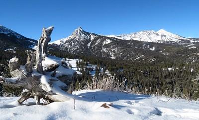 South Fork Brackett Creek Jan2014
