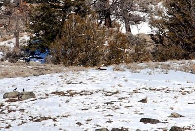 wolves lying down DSC_0927.jpg