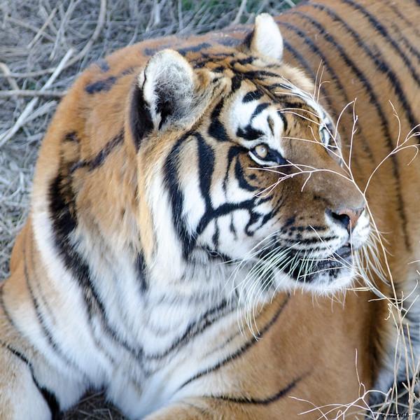 Wild Animal Sanctuary C