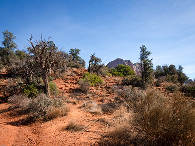 Sedona trails...
