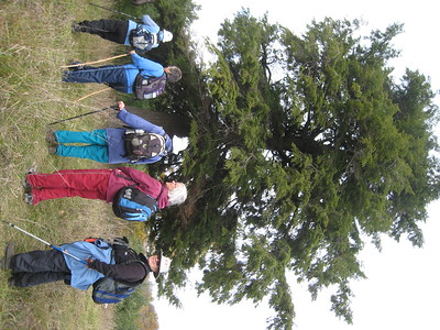 We stopped to admire a tall hemlock tree.