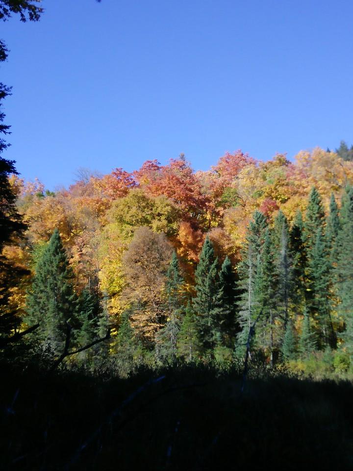 Mink Creek foliage