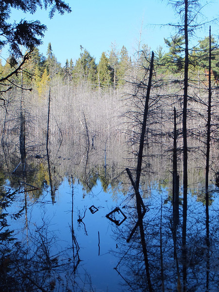 Eerie beaver pond between Otterpaw and Rainbow Lakes
