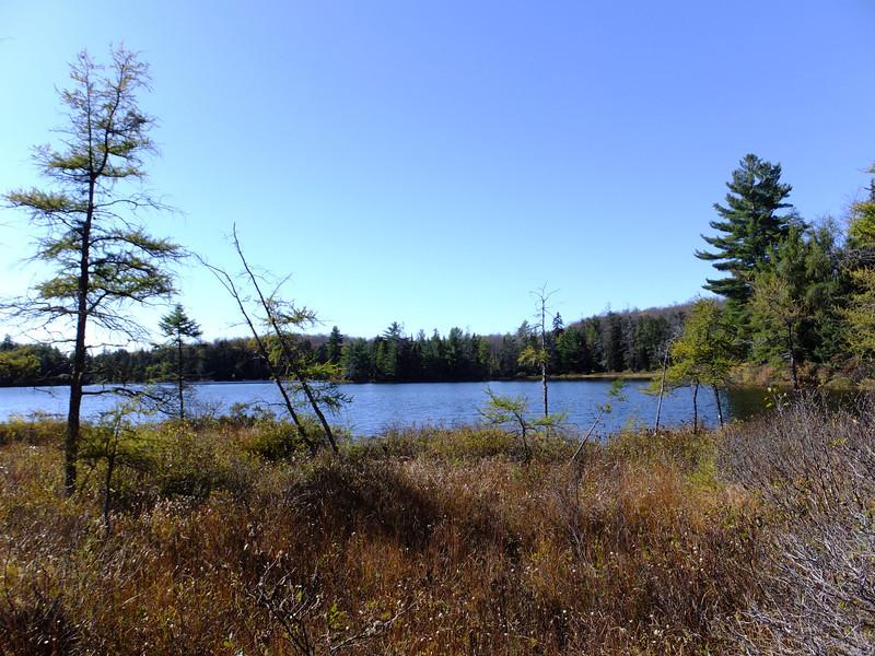 Swampy northern end of Maple Leaf Lake.