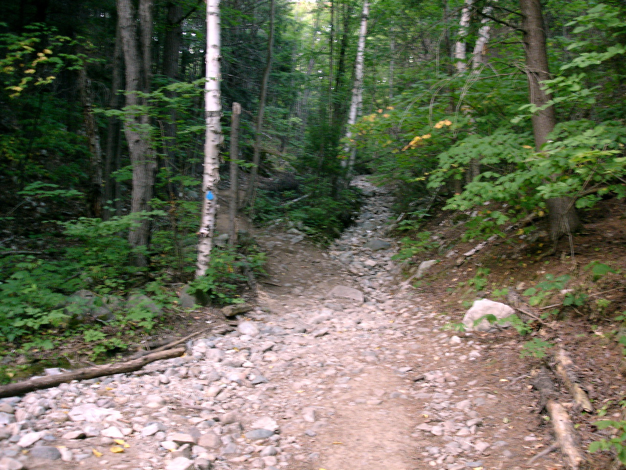 The first challenge is this never-ending tote road that climbs over a ridge to Three-Narrows Lake.
