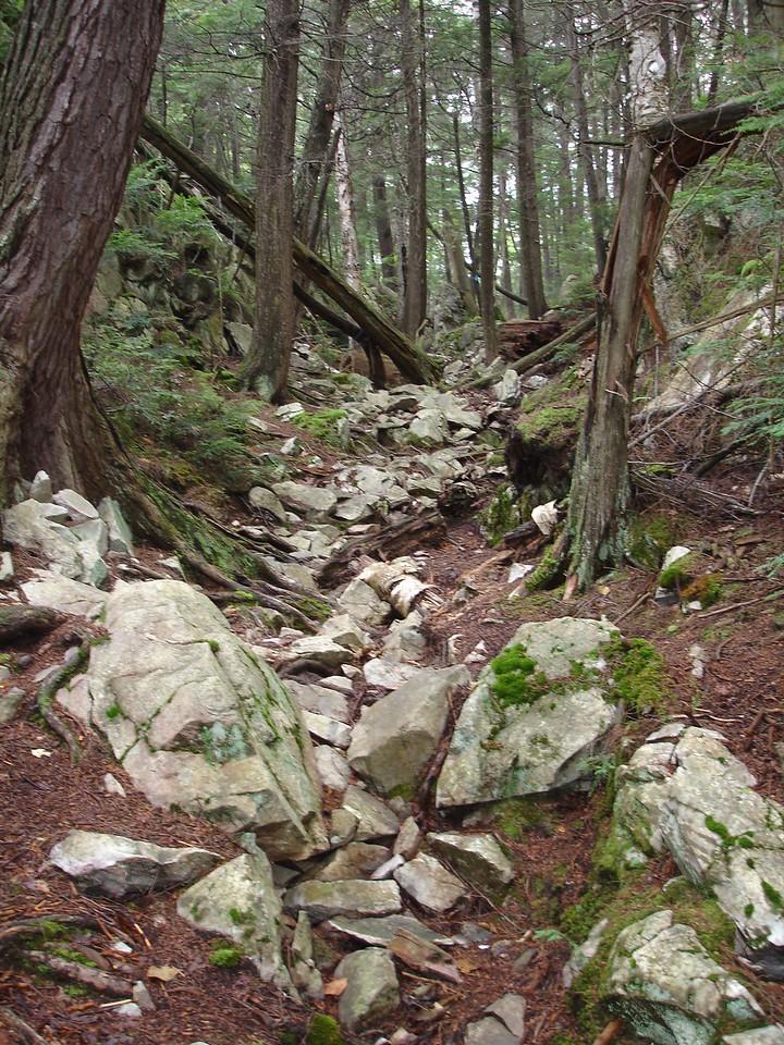 The trail climbs through a misty hemlock forest.
