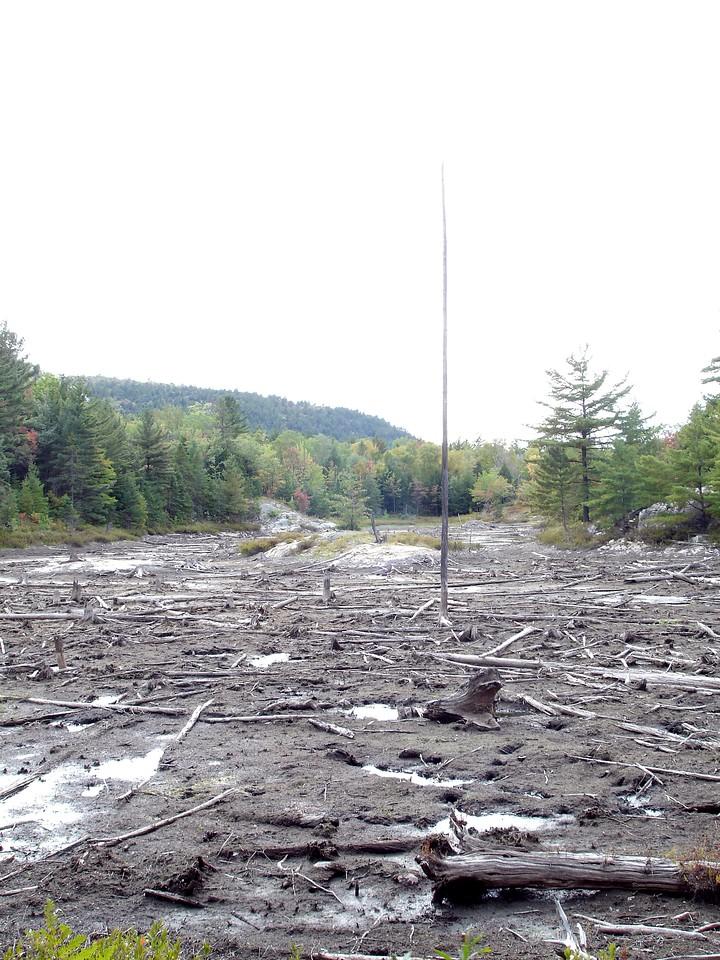 Recently drained beaver pond