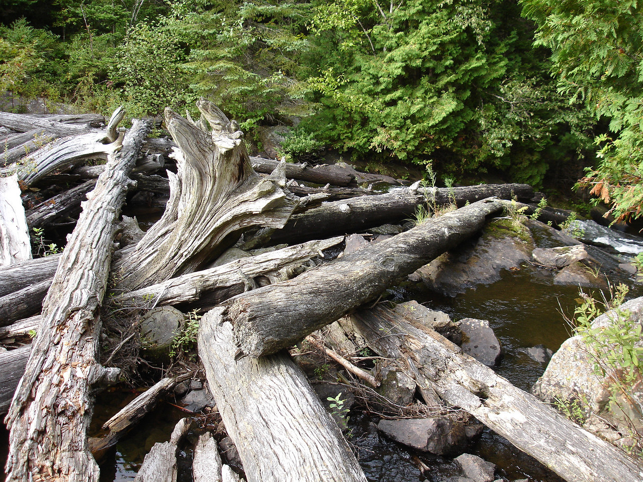 Logjam, exit of Head Lake