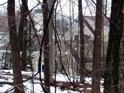 Metacomet Trail in Conn. Part 3 - Mr. Cent's Crib to Edgewood Road, Berlin