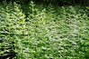 Ferns - the plant du jour.