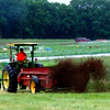 Action photo of manure-spreader