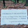 What did Thoreau hoe?
