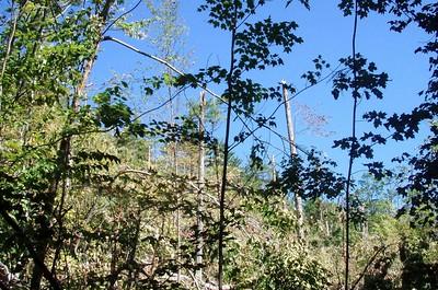 Libby Trail - tornado damage (Sept. 1)