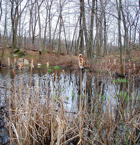 Middlesex Fells - Wright's Pond (April 11)