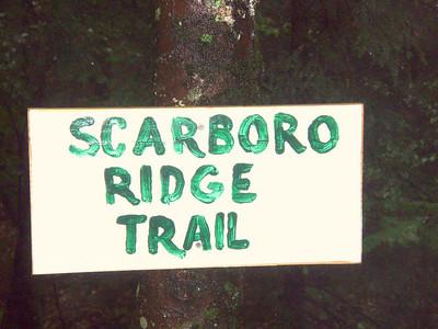 Scarboro Ridge Trail IV - Hurricane Danny (August 29)