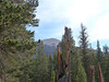 Trail Peak, my destination.