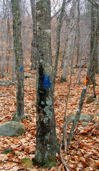 Trailhead - .11 mile south of circle at the end of well-groomed Frohock Brook Rd. (on the rough extension of that Rd.)