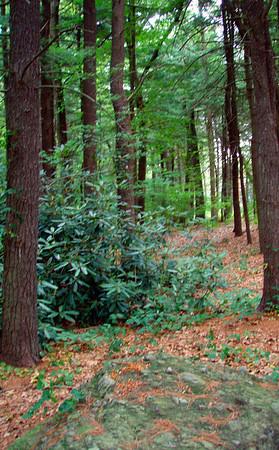 Hammond/Webster Trails in Chestnut Hill (August 8)