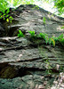 Puddingstone ledges, in NW section of Webster Conservation Area.