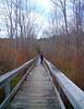 Jacki observes Cedar Swamp from its boardwalk.