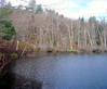 Cedar Swamp Pond