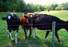 The DCR still operates the Estate's dairy farm.
