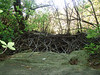 A bridge of large flat stones and a beaver-dam, in Douglas SF.