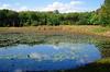 A little pond by Douglas Road