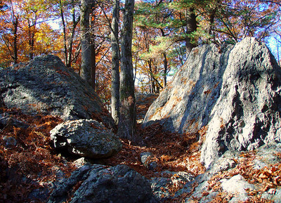 Puddingstone outcropping, in Saw Mill Brook Conservation Area.