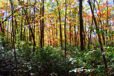 Willard Brook State Forest (Three Tens)