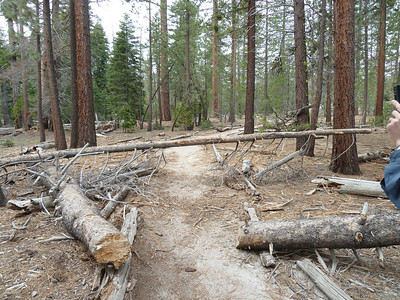 Tree across the trail.  Brent talked to a lady who was hiking yesterday when it fell, missing her by about ten feet.