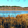 More marshland.