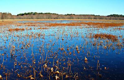 Great Meadows NWR - Concord and Sudbury (December 26)