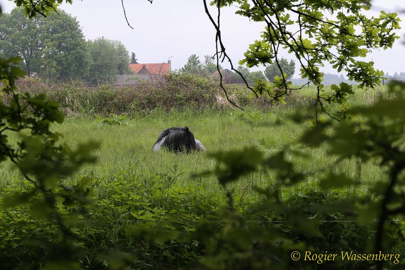 Visvijvers_RWAS-3618