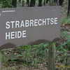Strabrecht_RWAS-5792