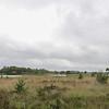 Strabrecht_RWAS-5795