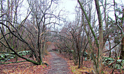 Ipswich River Wildlife Sanctuary (January 12)