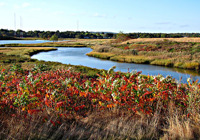 Lower Neponset River Trail (October 13)